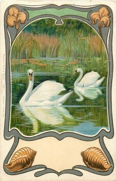 two swans on lake, both move left in front of rushes, grey surround, shells at base, iris above