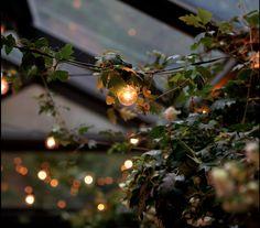 luz vegetal