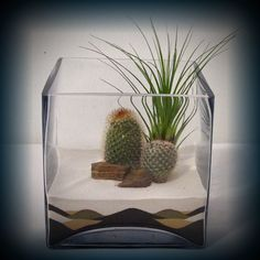 terrariums with sand art - Google Search