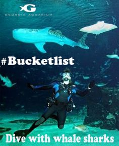 #Bucketlist Diving with whale sharks! Georgia Aquarium's Journey with Gentle Giants makes it a possibility! #LoveAtlanta