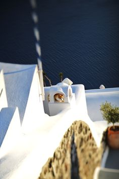 GREECE CHANNEL | a cat in ..? Santorini, Greece