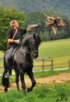 Falconer on horseback calling back his raptor.