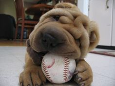 Wrinkly dogs are all over my dash right now. I LOVE IT.