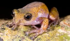 Thorny frog and dementor wasp among new species discovered in Mekong