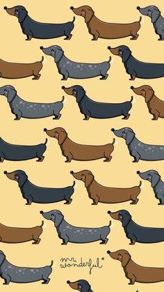 Ideas wallpaper fofos cachorro salsicha for 2019 Tumbler Backgrounds, Cool Backgrounds, Wallpaper Backgrounds, Arte Dachshund, Dachshund Love, Dachshund Puppies, Daschund, Mr Wonderful, Dog Wallpaper Iphone
