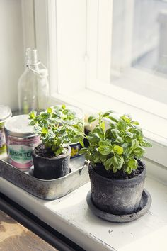 Fresh herbs on windowsill // pic: www.eevakolu.fi
