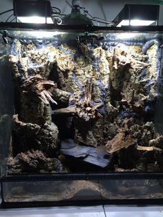 Use silicone and wedge tree fern strips into negative space instead of spray foam Reptile Habitat, Reptile Room, Reptile Cage, Gecko Vivarium, Snake Terrarium, Terrarium Diy, Bearded Dragon Cage, Aquarium Design, Pet Dragon