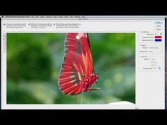 Photoshop Elements 10 Editor Tutorial: How to use the Magic Extractor Photoshop Help, Adobe Photoshop Elements, Photoshop For Photographers, Photoshop Photography, Photoshop Tutorial, Photoshop Actions, Lightroom, Photography Articles, Photography Lessons