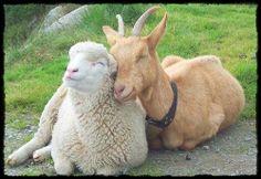 tenderness between animals