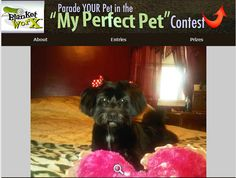 My Missy loves to take pictures after a day at the spa. Here is a picture of Missy playing with her  favorite heart pillow.    Share your pet's photo for a chance to win a chance to win one of 7 beautiful photo gifts!  Submit their photo herehttp://www.myperfectpetcontest.com  and for more great ways to showcase your photo memories visit BlanketWorx