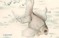 白い金魚 Goldfish, Creatures, Pets, Dragon, Animals, Tattoos, Animals And Pets, Animales, Animaux
