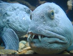 This is the ugliest fish I've ever seen.