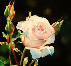 Shell Pink Rose and Stock Reduction on DVD's, painting by artist Jacqueline Gnott