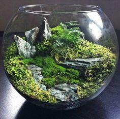 Mini jardínes mágicos