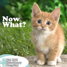 Getting a new pet is always exciting, but you may forget about some of the must-haves. Download our New Kitten Checklist so you have everything you both need.