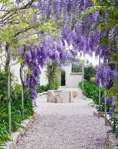 lovely wysteria...for the back porch