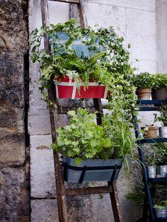 Add an old ladder to your urban garden and hang SOCKER flower boxes. Garden Trellis, Balcony Garden, Herb Garden, Home And Garden, Ikea Outdoor, Ikea Inspiration, Garden Inspiration, Ikea Exterior, Ikea Portugal