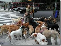 A dog walker with dogs belonging to people too busy to care for them Funny Animal Images, Funny Animals, Funny Pictures, Cute Animals, Cute Dogs And Puppies, I Love Dogs, Doggies, Pet Relocation, Winning The Lottery