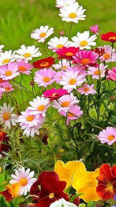 Цветы - анимация на телефон №1396420