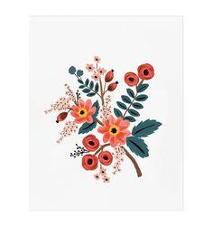Coral Botanical Illustrated Art Print