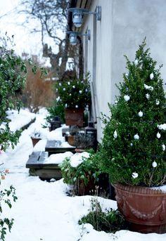 Blide juletoner i den gamle villa - Boligliv