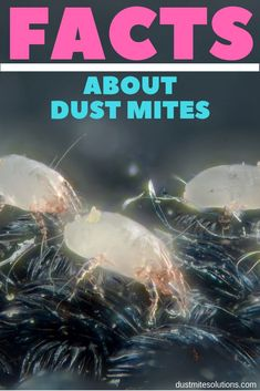 Dust mites are invisible to our eyes, however they can cause use a lot of health problems. Most homes have dust mites and they could be causing your allergies. It's disturbing to think about but these creatures live in your bed and pillows! Cure For Allergies, Kids Allergies, Dust Mite Allergy, Allergy Shots, Holistic Approach To Health, Household Pests, Health Questions, Cleaning Dust