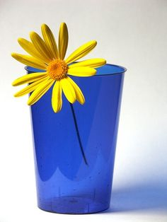 blue and yellow at home
