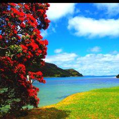 Beautiful Houhora, Northland, New Zealand