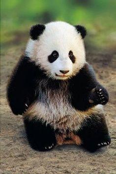 Google Image Result for http://www.chetscorner.com/chatter/files/dancing-panda.jpg