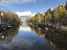 #amsterdam #seagullboogie