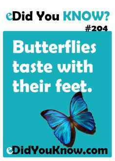 Butterflies taste with their feet. http://edidyouknow.com/did-you-know-204/