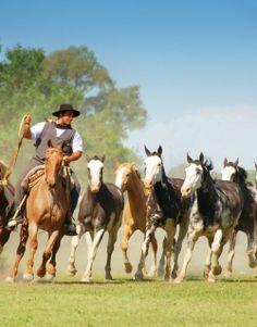 Gaucho with horses (Gaucho con caballos) Mendoza, Rio Grande Do Sul, Montevideo, South America Travel, Fauna, Horse Breeds, Horseback Riding, Beautiful Horses, Uruguay