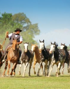 Gaucho with horses (Gaucho con caballos) | San Antonio de Areco | Buenos Aires | Argentina - Eduardo Amorim