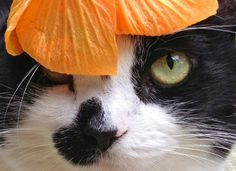 Sexy kitty wearing hibiscus bonnet.