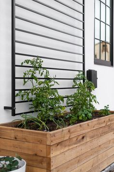 This modern DIY trellis is made from an in-stock fence panel! In just 5 steps you can have this ready for your favorite climbers! Diy Trellis, Garden Trellis, Fence Garden, Planters On Fence, Garden Paths, Trellis Fence Panels, Diy Fence, Backyard Fences, Modern Landscaping