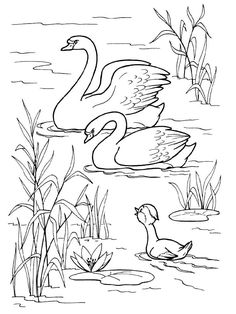 Swan Coloring Pages - Best Coloring Pages For Kids