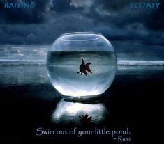 Swim out of your little pond!