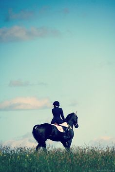 black horse, blue sky by Jennifer MacNeill-Traylor, via Flickr
