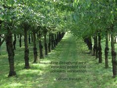 Eine Beziehung wird vorwärts gelebt und rückwärts verstanden. Kenneth Branagh #zitat #quote #printables #Beziehung