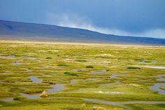 Wildchöne Pampa Cañahuas - Hochmoor - Auf Weg zum Colca Canyon - Peru