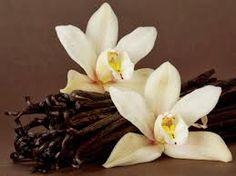 Resultado de imagen para flor de vainilla