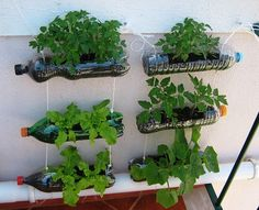 30 Stunning Low-Budget DIY Garden Pots and Containers - Container Gardening Vegetable Decoration, Diy Garden Decor, Balcony Garden, Garden Planters, Diy Hanging Planter, Planter Ideas, Bottle Garden, Home Vegetable Garden, Container Flowers