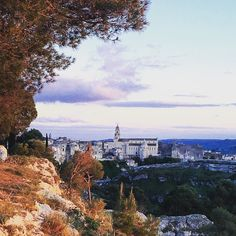 Spiragli.  #gravina #gravinatoday #gravinainphoto #gravinainpuglia  #ig_puglia #igerspuglia #igers #igersoftheday #bestpugliapics #puglia #puglia #pugliamia #pugliatop #pugliagram #natura #nature #sun #sunburn #sunsetporn #tree #instamood #picoftheday #iphonesia #vsco #landscape #amazing #pineta
