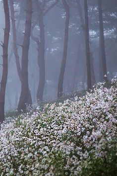 "ponderation: "" Wild Flowers in the Pine Forest by Jungshik Lee """