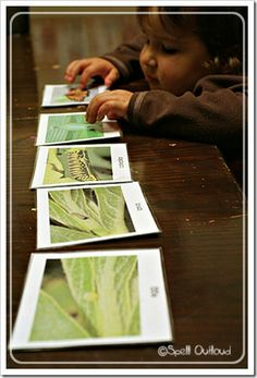 Activity of the Week  Life Cycle of a Butterfly (Photo from Spell Outloud)#Repin By:Pinterest++ for iPad#