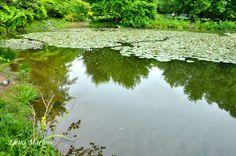 Il lago in primavera!