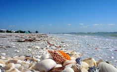 shell-beach-Sanibel island in Florida Sanibel Island, Sanibel Beach, The Places Youll Go, Places To See, Family Vacation Spots, Vacation Places, Vacation Ideas, Destinations, Shell Beach