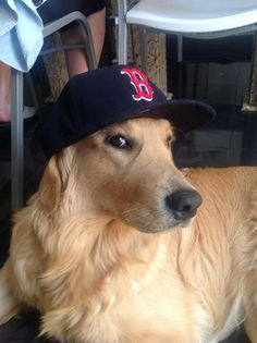 Fenway sporting his Red Sox hat even though I am a Yankees fan, he is still cute.