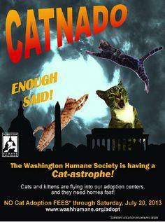 Washington Humane Society Experiencing a 'Catnado,' Needs Adopters