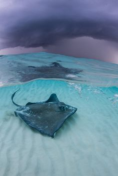 (I swam with these on my vacation there, they are soft as silk)  Stormy Skies over Stingray City ~ Cayman Islands